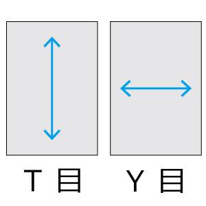 紙目 T目とY目